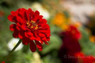 flower macro benny abolmaali austin