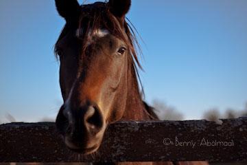 horse benny abolmaali photography